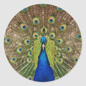 Beautiful peacock and tail feathers print classic round sticker