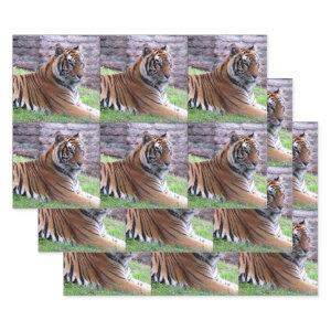 Bengal Tiger  - All Occasion Wrapping Paper Sheets