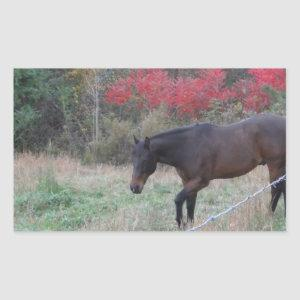 Brown horse in the red autumn trees rectangular sticker
