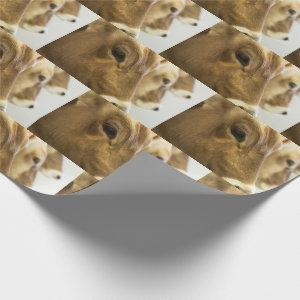 Brown Swiss Dairy Cows Wrapping Paper