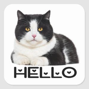 Cute Kitty Black White Kitten Hello Cat Square Sticker