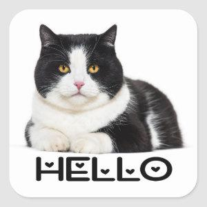 Cute Kitty Kitten  Hello Black White Cat Square Sticker
