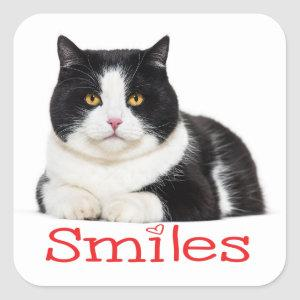 Cute Kitty Kitten Smiles Hello Black White Cat Square Sticker