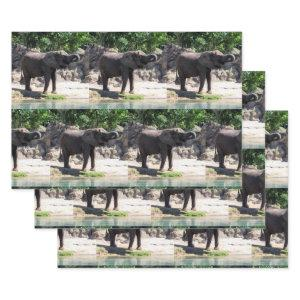 Elephant - Wrapping Paper Sheets