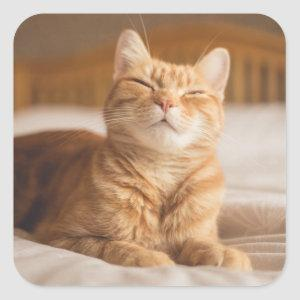 Getty Images | Sleepy Cat Square Sticker