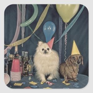 Happy Birthday Party with Dogs and Drinks Square Sticker