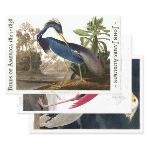 MAGNIFICENT AUDUBON HEAVY WEIGHT DECOUPAGE PRINTS WRAPPING PAPER SHEETS