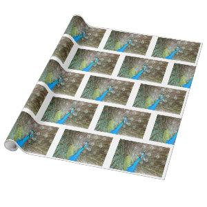 Peacock with Feathers Fanned - Wildlife Bird Photo Wrapping Paper