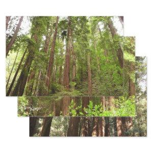 Up to Redwoods I at Muir Woods National Monument Wrapping Paper Sheets