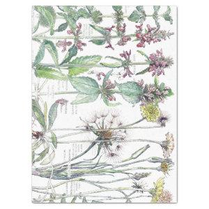 Vintage Cats Ear Flower Wildflowers Tissue Paper