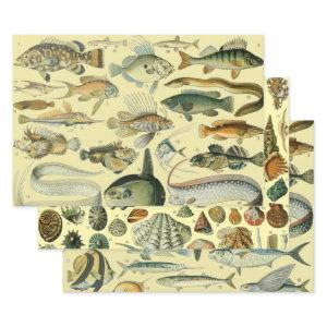 Vintage Fish Scientific Fishing Art Wrapping Paper Sheets