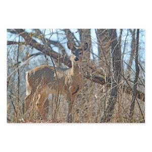 Wildlife Deer Woods Photo Wrapping Paper Sheets
