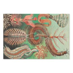 Worms, Annelids Chaetopoda by Ernst Haeckel Wrapping Paper Sheets